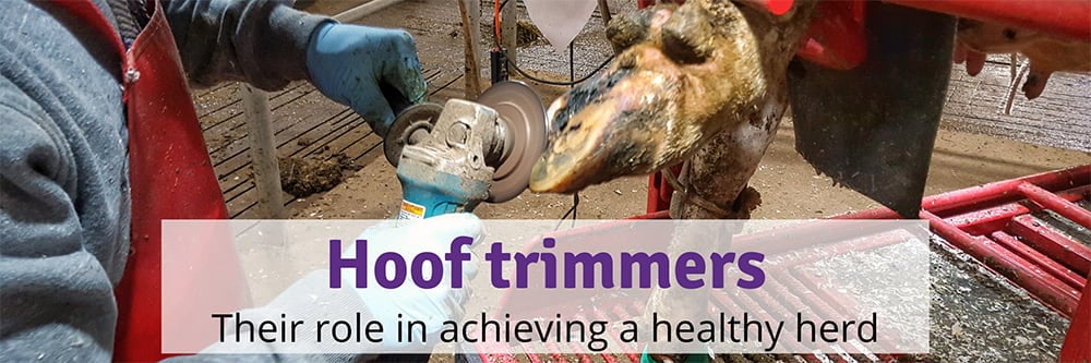 Where Can I Find a Hoof Trimmer?