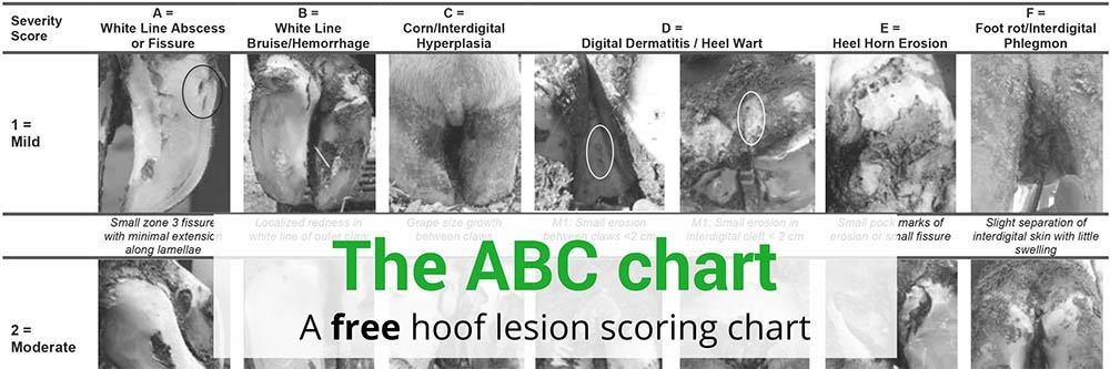 Hoof Lesion Scoring ABC chart