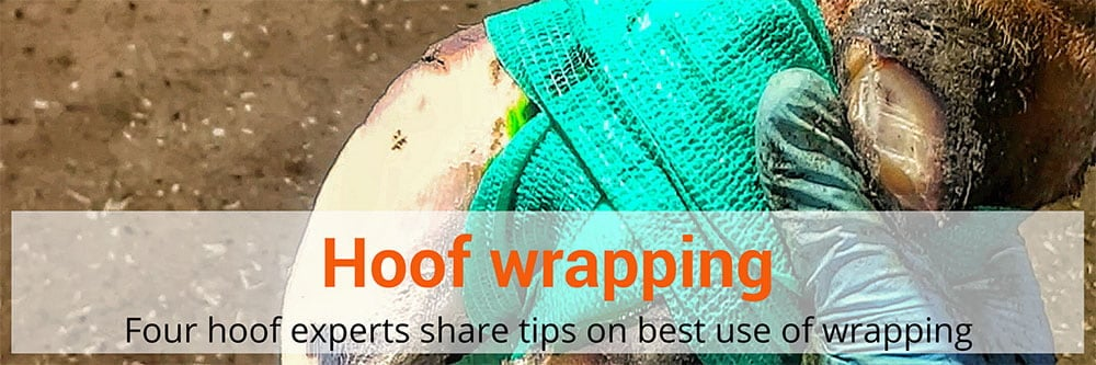 Four hoof experts share tips on hoof wrapping