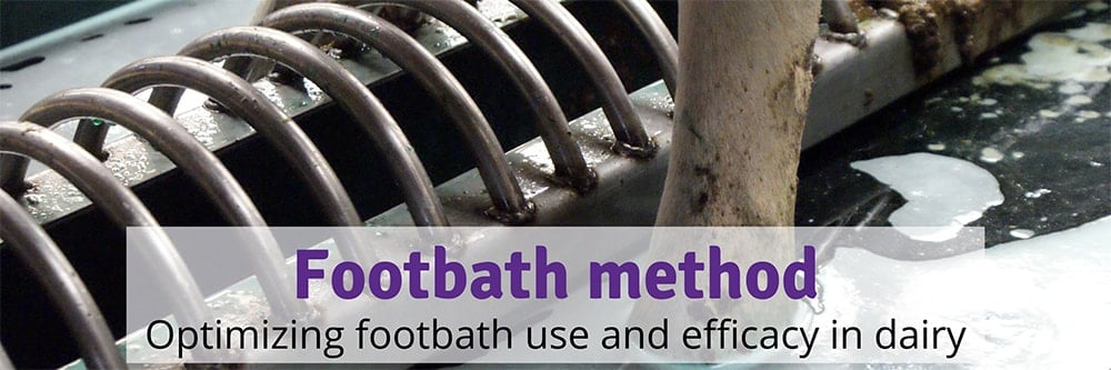 Footbath Method in Dairy Cattle